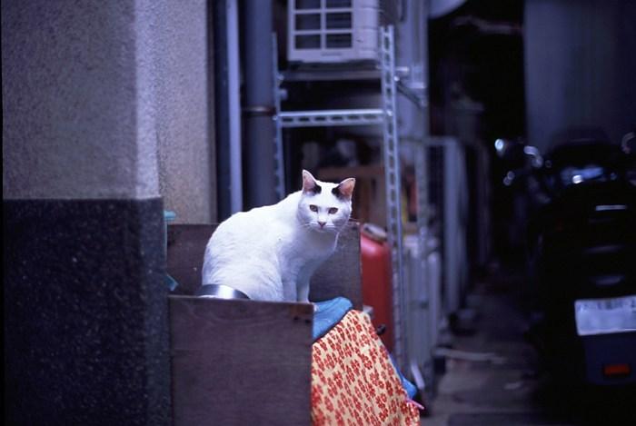cat_1-s