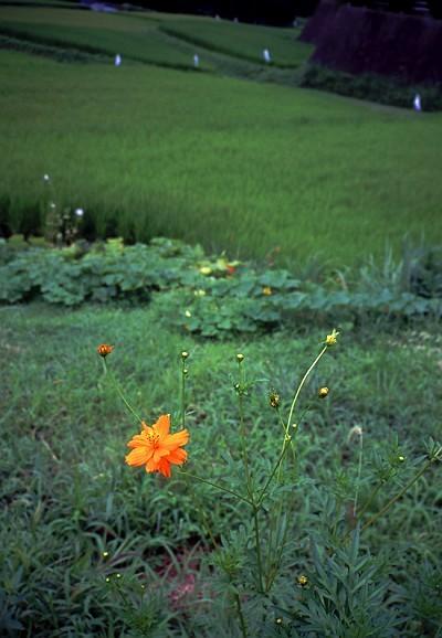flower-s
