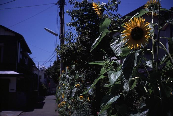 flower4-s
